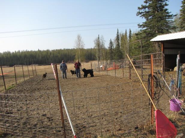 Herding test 002
