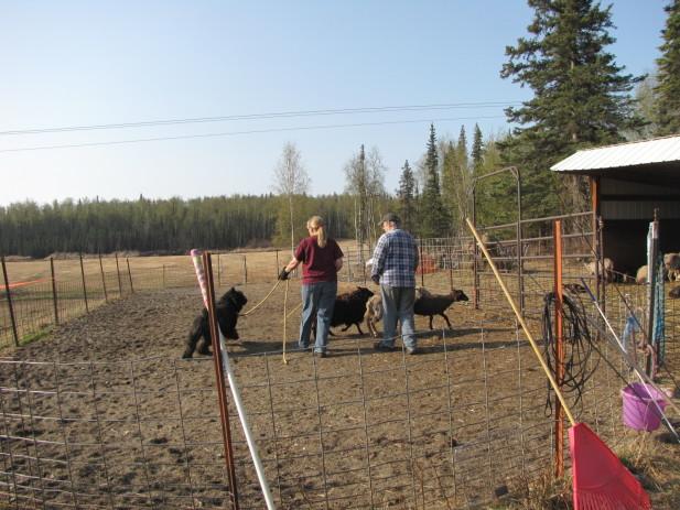 Herding test 003