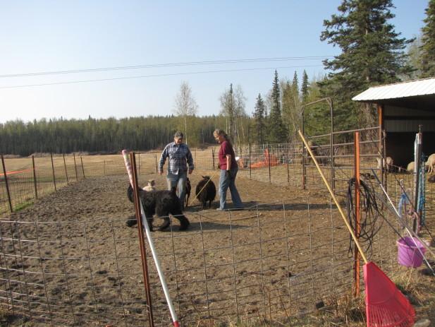 Herding test 004