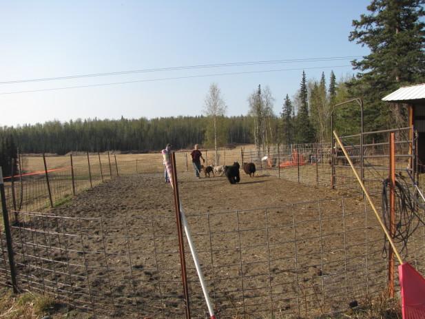 Herding test 005
