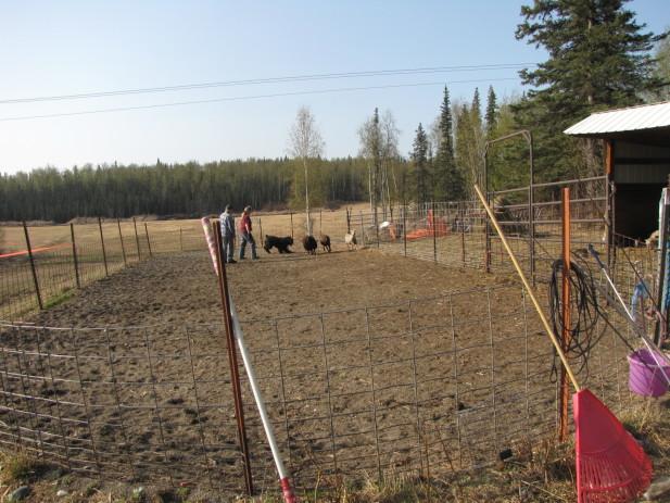 Herding test 006