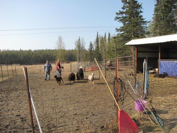 Herding test 007