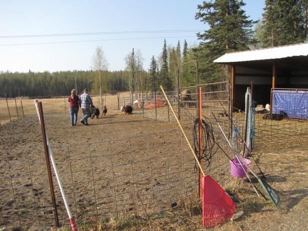 Herding test 009