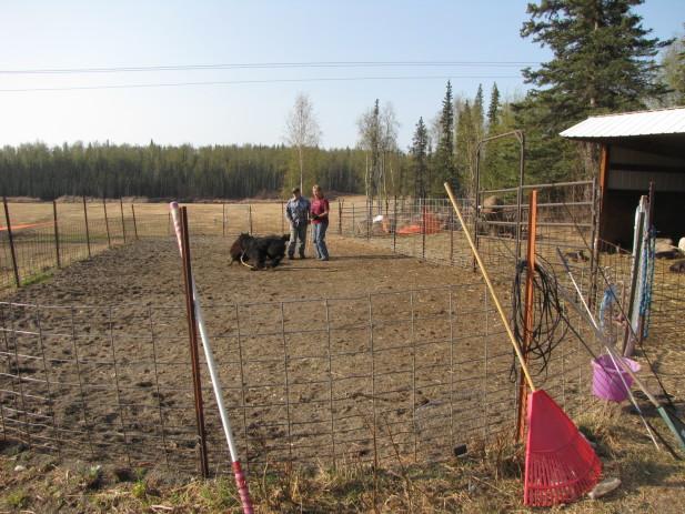 Herding test 010