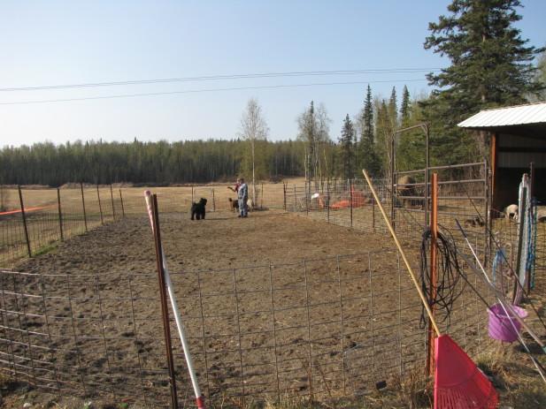 Herding test 011